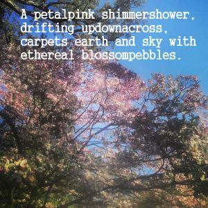 petalpink shimmershower