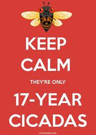 keep calm theyre only 17 yr cicadas