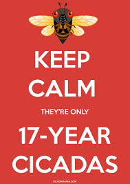 keep calm theyre only 17 yr cicadas